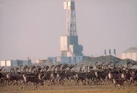 ANWR.oildrilling.Umass.edu.